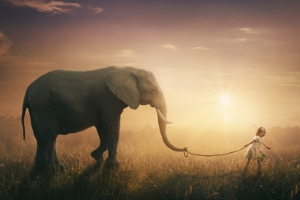 The Elephants' Crematorium